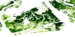 Mangrove Canopy Height Estimates in Zambezi Delta, Mozambique, derived from VHR Stereo